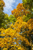 Automne jaune, vert et orange en parc, Varsovie, Pologne photo stock