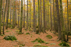 Automne L'Allemagne, forêt bavaroise Photo stock