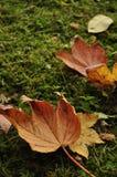 Automne, lames colorées Image stock
