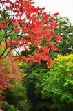 Automne, lames colorées Image libre de droits