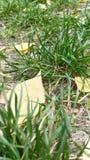 Automne, lames Les feuilles sur l'herbe Couleurs d'automne Ambre Vert images stock