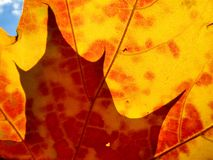 Automne lames oranges et de rouge photos libres de droits