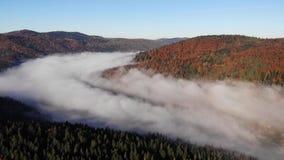 Automne magique et coloré dans Carpathiens, Ukraine Le brouillard de matin enveloppe les montagnes et la forêt clips vidéos