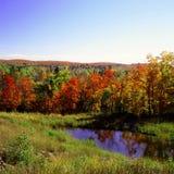 Automne maximal dans la réserve forestière supérieure Images libres de droits