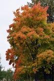 Automne, nature, ciel nuageux de forêt d'automne Lames d'automne d'or Images stock