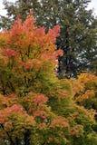 Automne, nature, ciel nuageux de forêt d'automne Lames d'automne d'or photographie stock