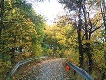 automne Norvège Photos stock