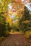automne Ontario Images libres de droits