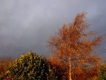 Automne orageux Images libres de droits