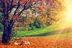 Automne, paysage de chute Arbre avec les lames colorées Image libre de droits