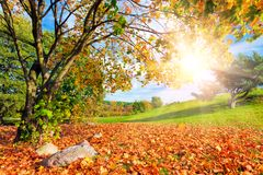 Automne, paysage de chute avec un arbre Briller de Sun photographie stock