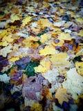 Automne Regard artistique dans des couleurs analogues de film de Velvia Photos libres de droits