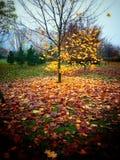 Automne Regard artistique dans des couleurs analogues de film de Velvia Photo libre de droits