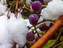 Automne rencontré l'hiver photo libre de droits