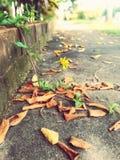 Automne sec de fleur de passage couvert de feuille images libres de droits