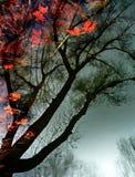 automne sous-marin Photos libres de droits