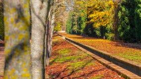Automne sous sa forme plus pure dans un jardin à Aranjuez, Madrid images stock