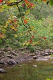 Automne sur The Creek Photographie stock