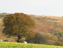 Automne sur Exmoor Images stock