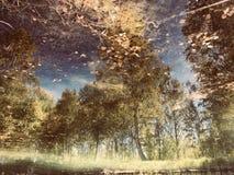 Automne sur la surface de l'eau Photos stock