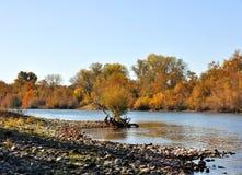Automne sur le fleuve de Sacramento images libres de droits