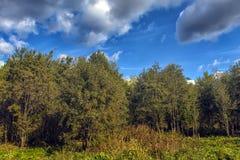 Automne tôt et nuages au-dessus des arbres images stock