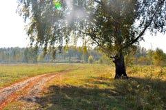 Automne tôt de paysage Un champ avec un chemin de terre et un bouleau d'or près de elle, parmi la forêt d'or d'automne et le ciel Images stock