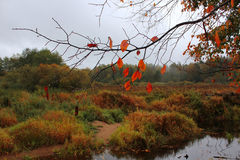 Automne tardif, Russie Photo stock
