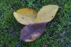 Automne tombé de feuilles Image stock