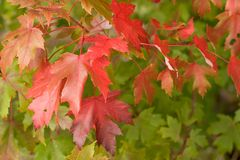 Automne, tombant juste Images stock