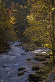 Automne, Tremont, Smokies NP, TN Photos stock
