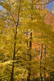 Automne, Tremont, Smokies NP, TN Images stock