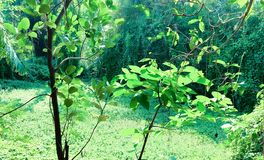 Automne vert de nature ici image libre de droits
