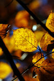 Automne vibrant #2 Images stock