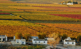 Automne Vineyards25 Images libres de droits