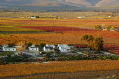 Automne Vineyards30 Photos stock