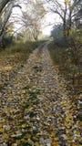 automnes Photographie stock libre de droits