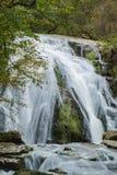 Automnes courus par hurlement, Jefferson National Forest, Etats-Unis photographie stock libre de droits