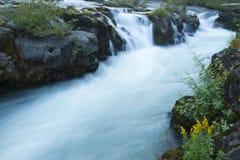 Automnes débarrassés des plants peu vigoureux de fleuve Image libre de droits