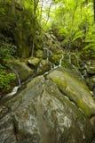 Automnes de branchement de falaise, Mtns fumeux grand NP Photographie stock