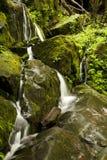 Automnes de branchement de falaise, Mtns fumeux grand NP, TN photos libres de droits