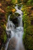 Automnes de duperie, Washington State Images stock