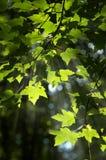 Automnes de lumière Photographie stock libre de droits