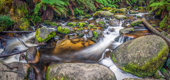 Automnes de Tarago - Australie Images stock
