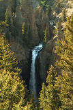 Automnes de tour de la rivière Yellowstone Photographie stock