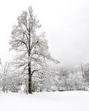 Automnes de Truemmelbach - l'hiver Photo stock