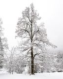 Automnes de Truemmelbach - l'hiver Images stock