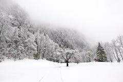 Automnes de Truemmelbach - l'hiver Photographie stock libre de droits