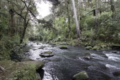 Automnes de Whangarei, Nouvelle Zélande image libre de droits