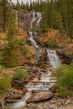 Automnes Jasper National Park de crique d'embrouillement Photos libres de droits